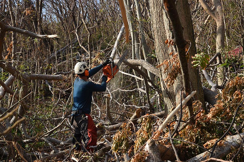 Volunteer on Naitauba pruning trees damaged by Cyclone Winston.