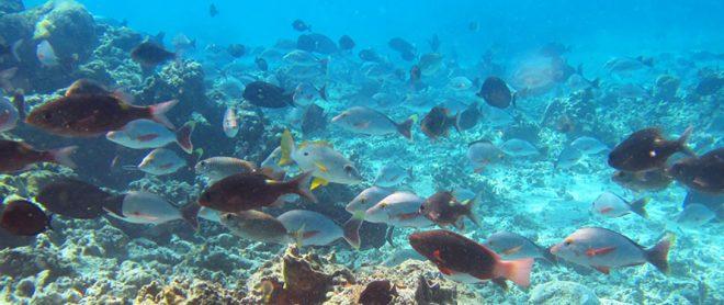 Day-2-fish_slider banner3